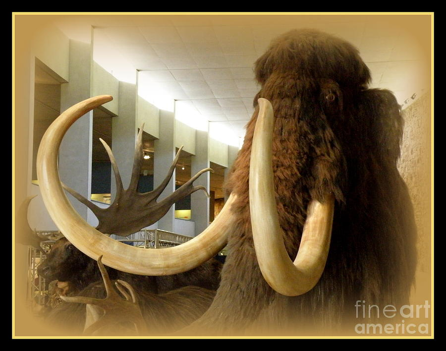Wooly Mammoth Photograph - Wooly Mammoth by Lainie Wrightson