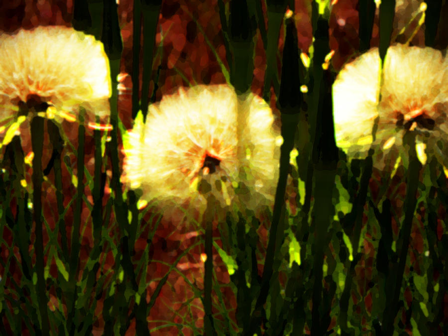 Abstract Photograph - Worlds Within Worlds by Lenore Senior