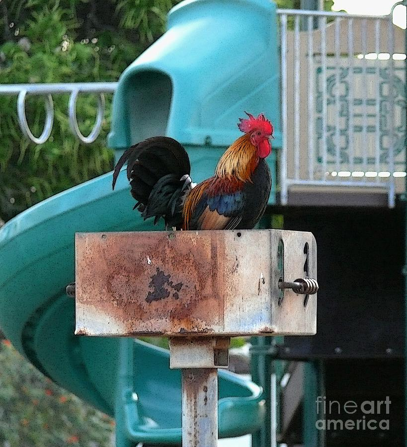 Rooster Photograph - Wrong Playground Mr Rooster by Terri Thompson
