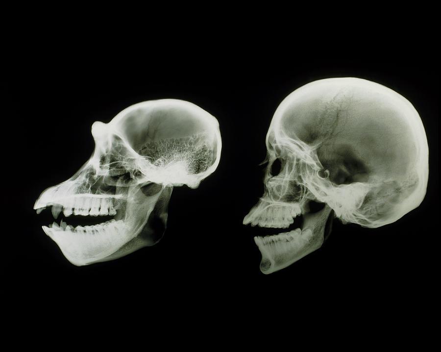 Human History Vs Natural History