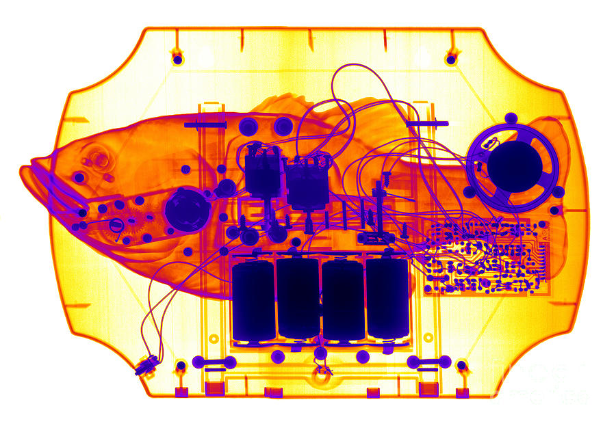 Xray Photograph - X-ray Of Mechanical Fish by Ted Kinsman