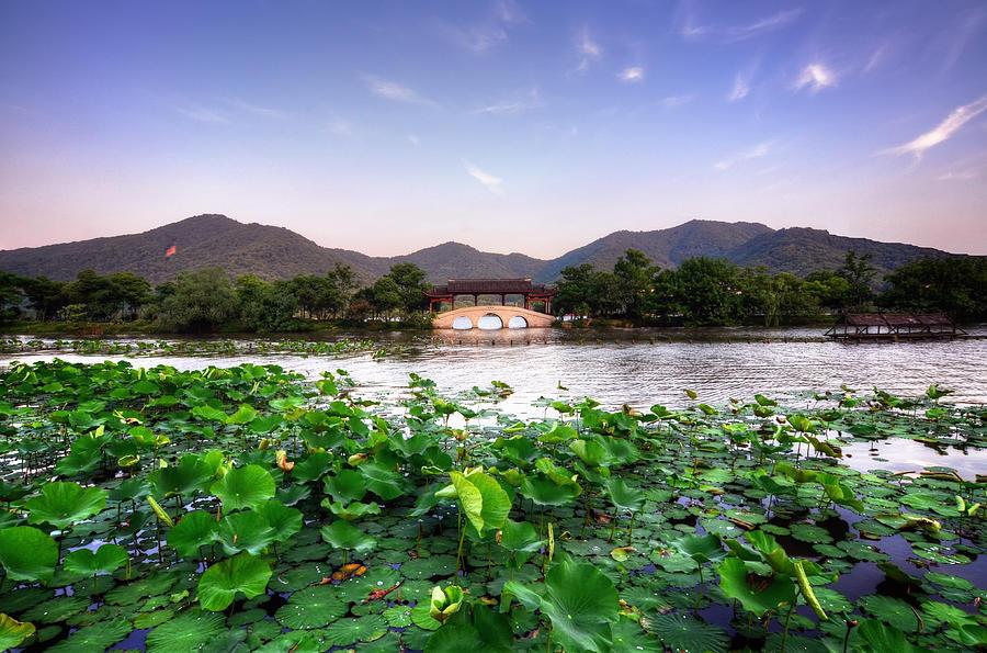 Horizontal Photograph - Xianghu - Lotus (xiaoshan) by Andy Brandl