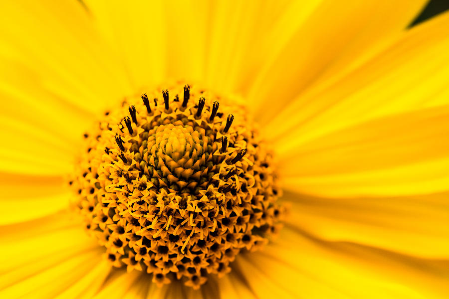 Yellow Photograph - Yellow 2 by Daniel Kulinski