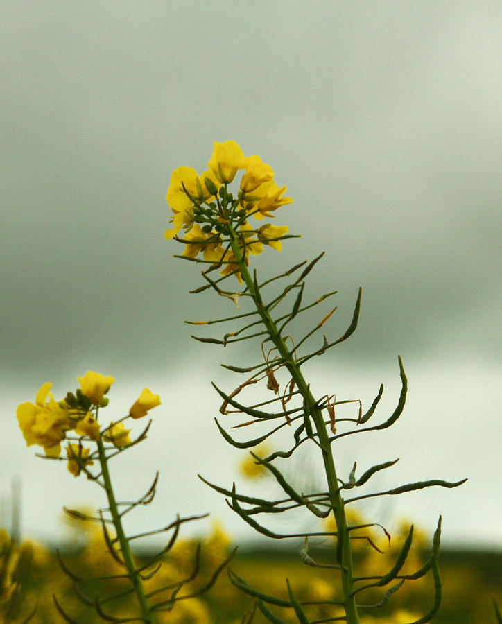 Yellow Photograph - Yellow And Grey by Jacqui Collett