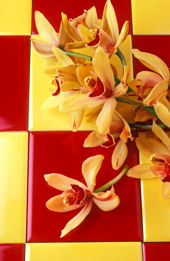 Orchid Photograph - Yellow And Red Orchids  by Garry Gay