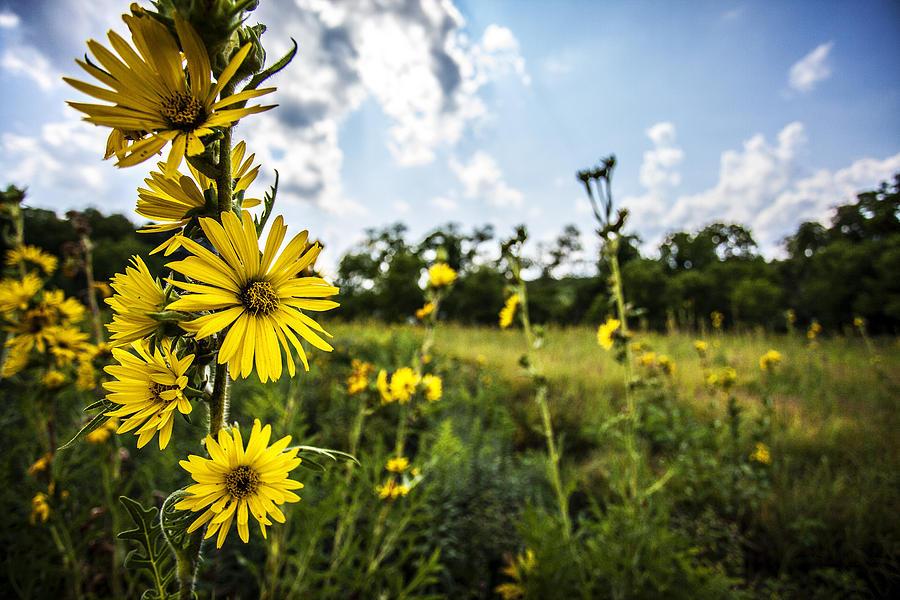Cj Schmit Photograph - Yellow As The Sun by CJ Schmit