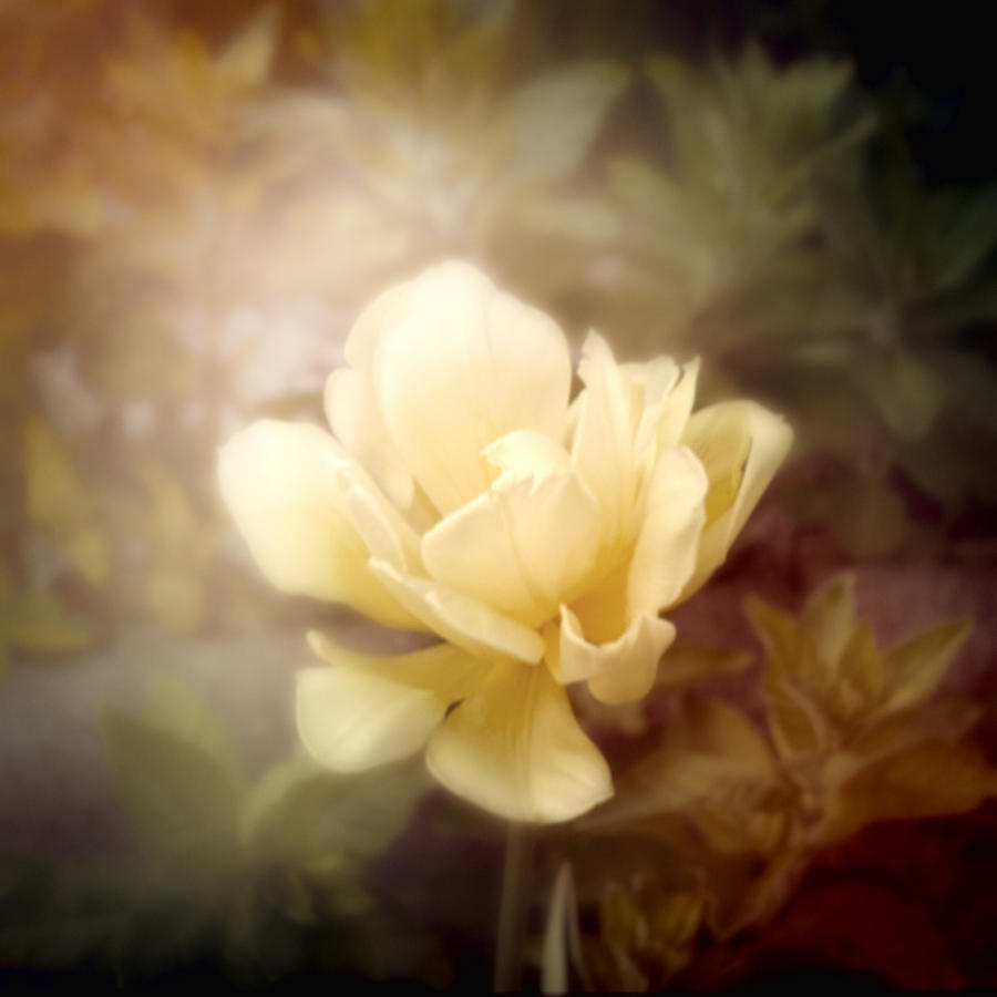 Yellow Photograph - Yellow Beauty by Cindy Grundsten
