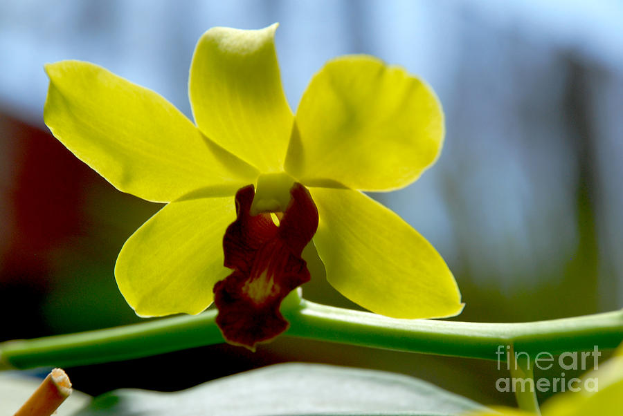 Flower Photograph - Yellow Beauty by Pravine Chester