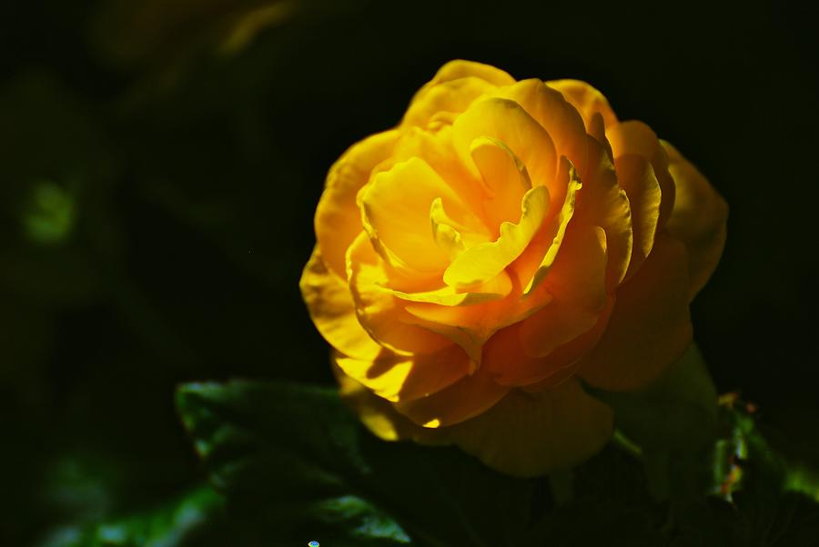 Flower Photograph - Yellow Bloom by Eric Tressler