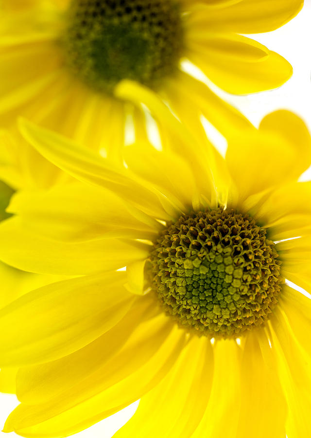 Abstract Photograph - Yellow Bright Yellow by Brad Rickerby