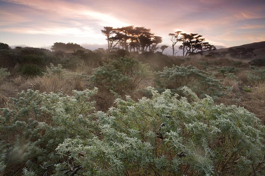 Yellow Bush Lupine And Monterey Cypress Photograph by Sebastian Kennerknecht