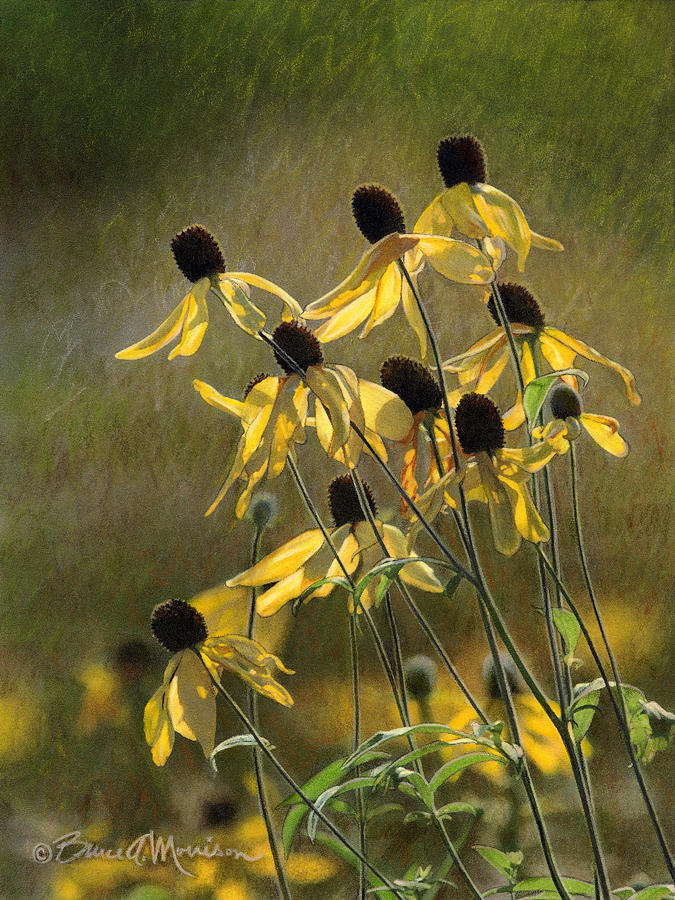 Color Pencil Drawing - Yellow Coneflowers by Bruce Morrison