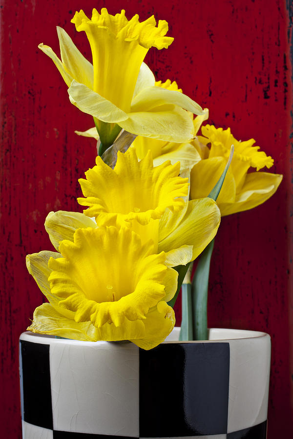 Yellow Photograph - Yellow Daffodils In Checkered Vase by Garry Gay