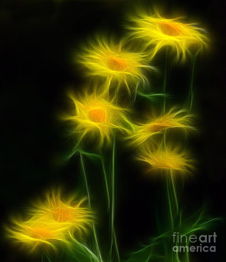 Daisy Photograph - Yellow Daisy Floral  by Marjorie Imbeau