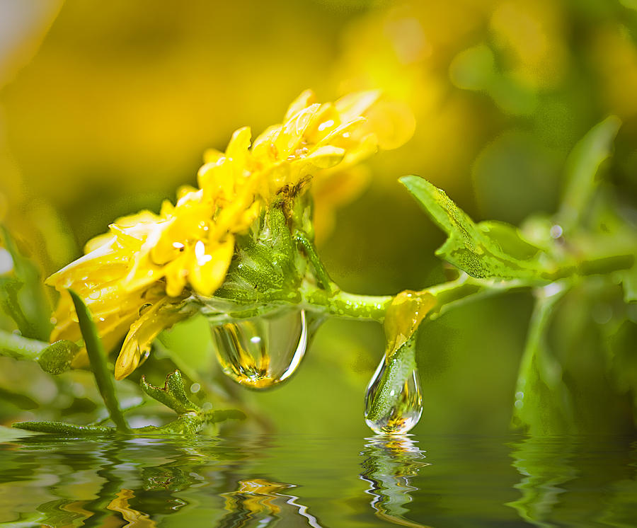Yellow Photograph - Yellow Drop by Trudy Wilkerson