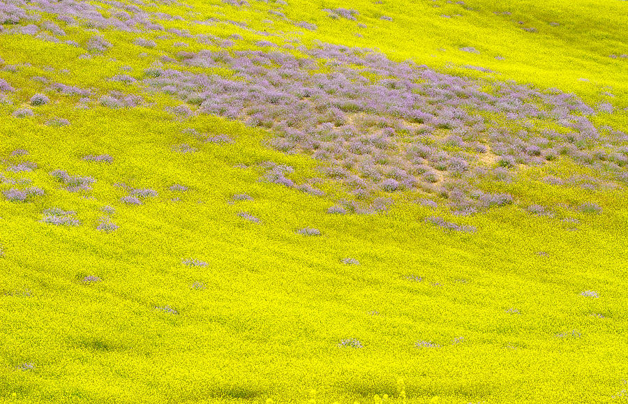 Flower Photograph - Yellow Fields by Guido Montanes Castillo