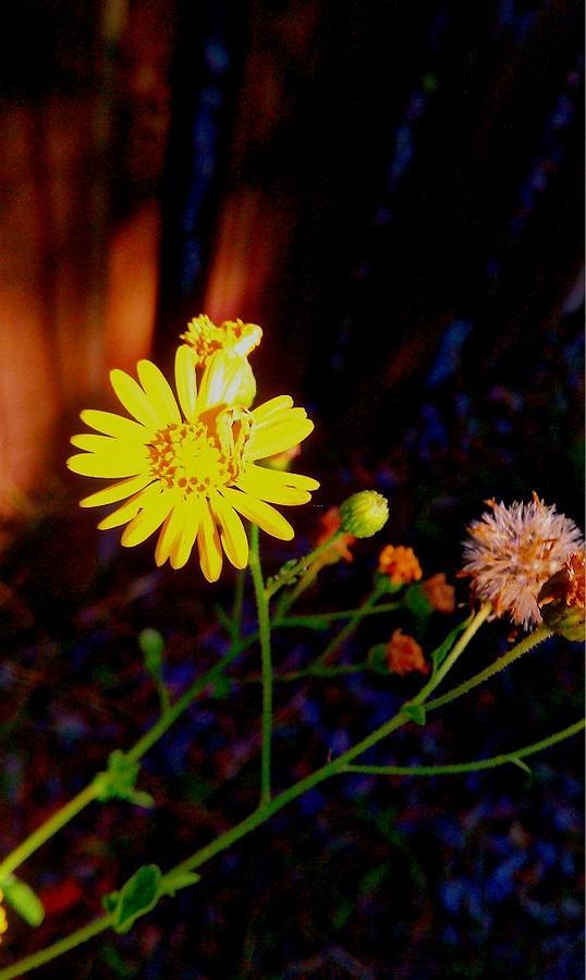 Yellow Flower Digital Art by Jessica Thomas