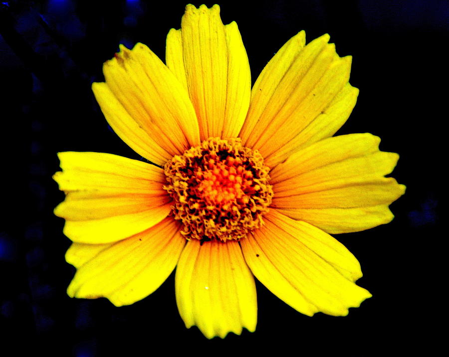 Flower Photograph - Yellow Flower by Marty Koch