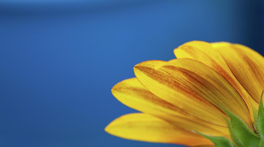 Horizontal Photograph - Yellow Flower by www.Asif-Ali.com