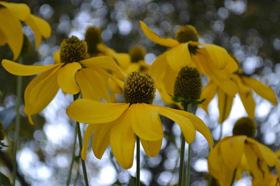 Bright Photograph - Yellow Flowers by Naomi Berhane