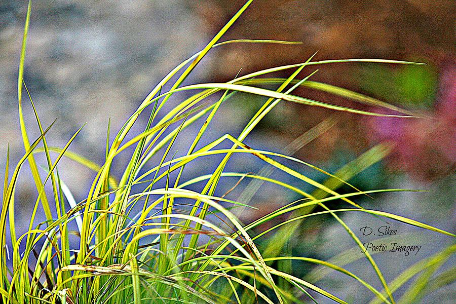 Flora Photograph - Yellow Grass by Debbie Sikes