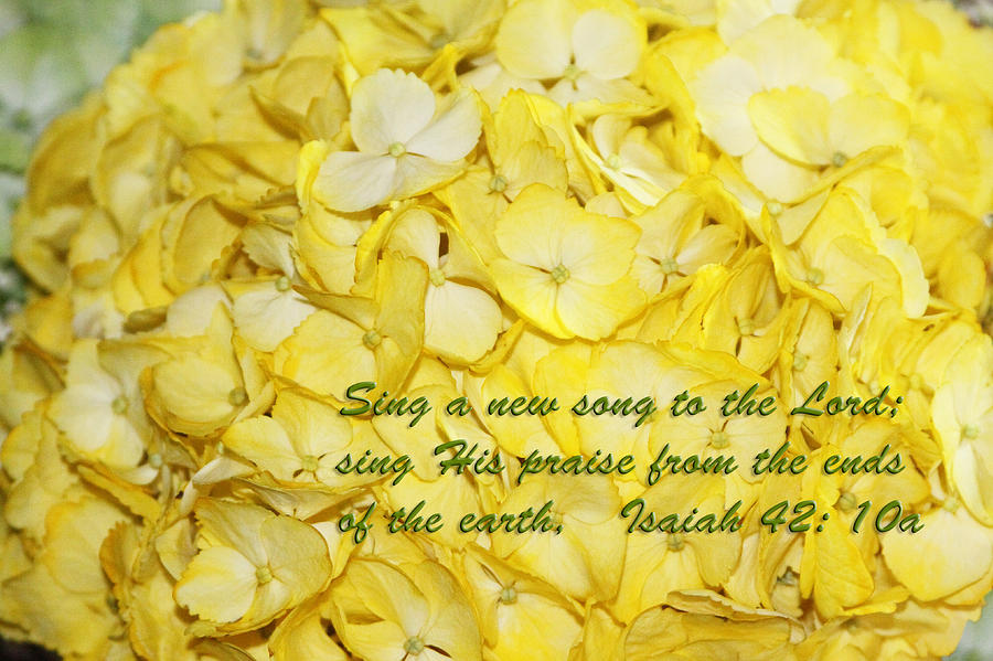 Scripture Photograph - Yellow Hydrangea Isaiah 42v10 by Linda Phelps