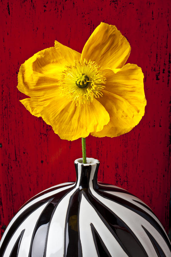 Vase Photograph - Yellow Iceland Poppy by Garry Gay