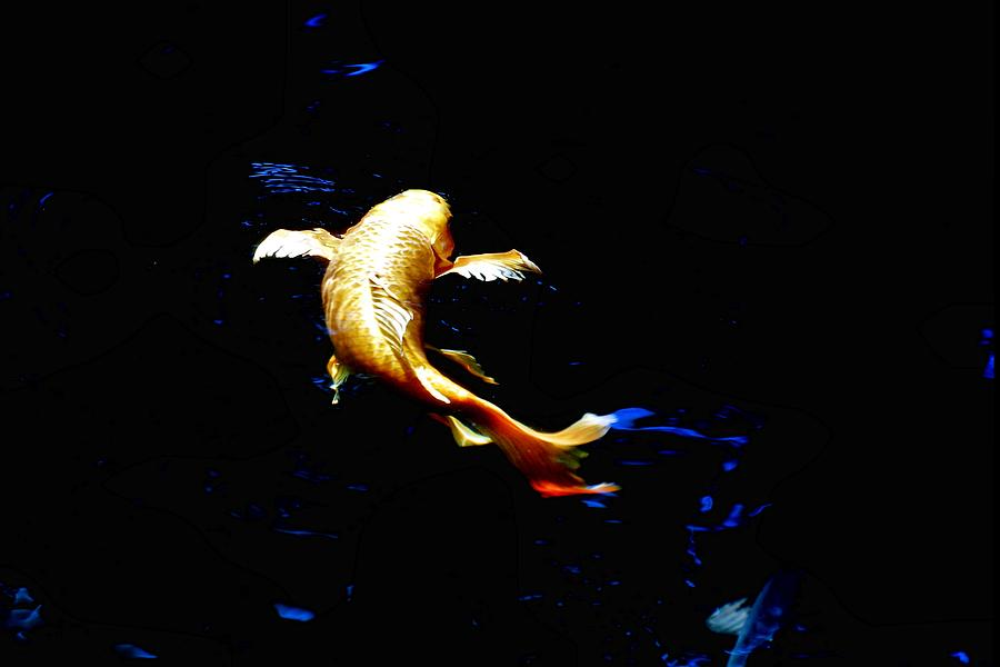 Koi Photograph - Yellow Koi by Don Mann