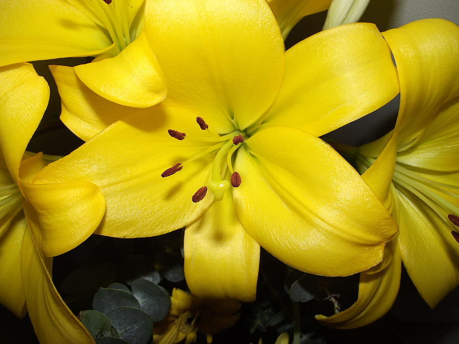 Flower Photograph - Yellow Lilies by Coral Dudley