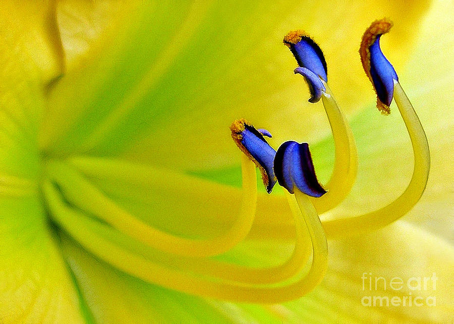 Lily Photograph - Yellow Lily by Judi Bagwell