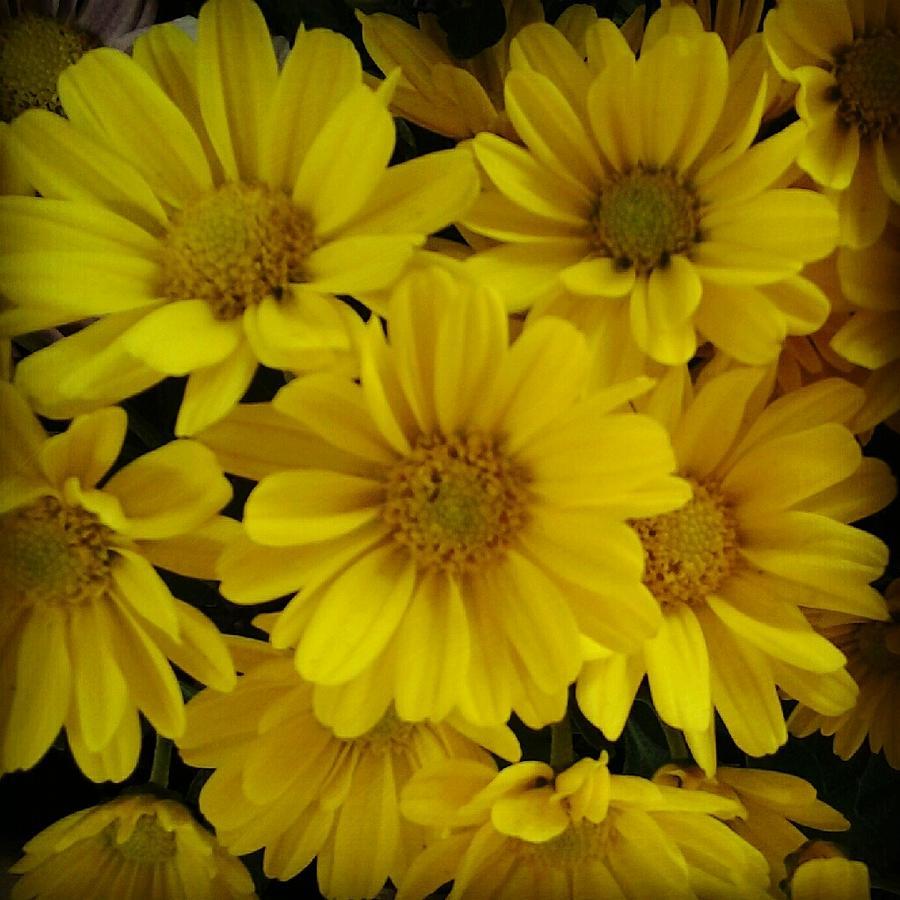 Landscape Photograph - Yellow Love by Chasity Johnson