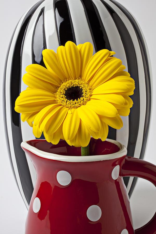 Yellow Mum Pitcher Vase Flower Photograph - Yellow Mum In Pitcher  by Garry Gay