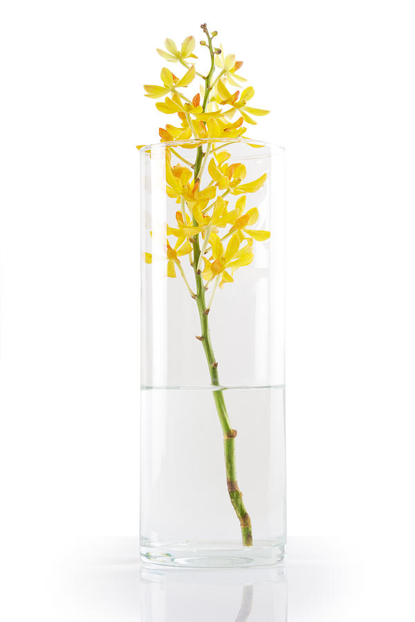 Asian Photograph - Yellow Orchid In Vase by Atiketta Sangasaeng