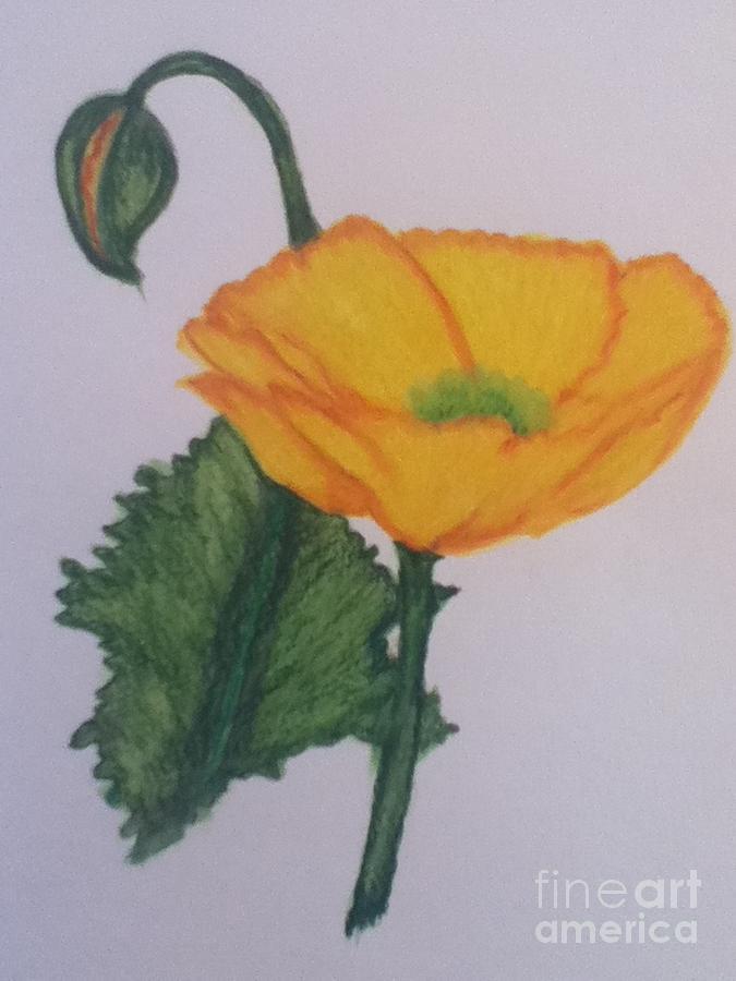 Poppy Painting - Yellow Poppy by Berta Barocio-Sullivan
