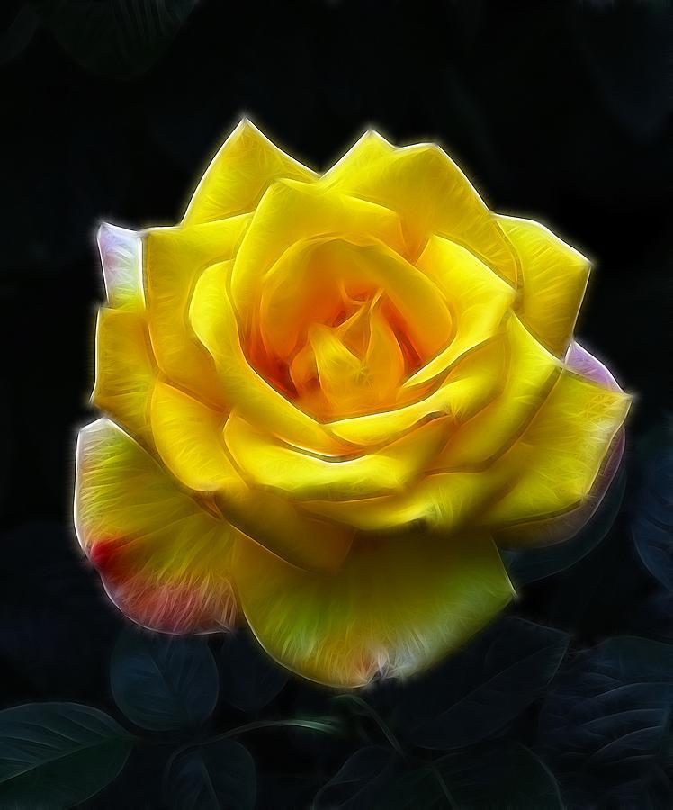 Macro Photograph - Yellow Rose In The Moonlight by Georgiana Romanovna