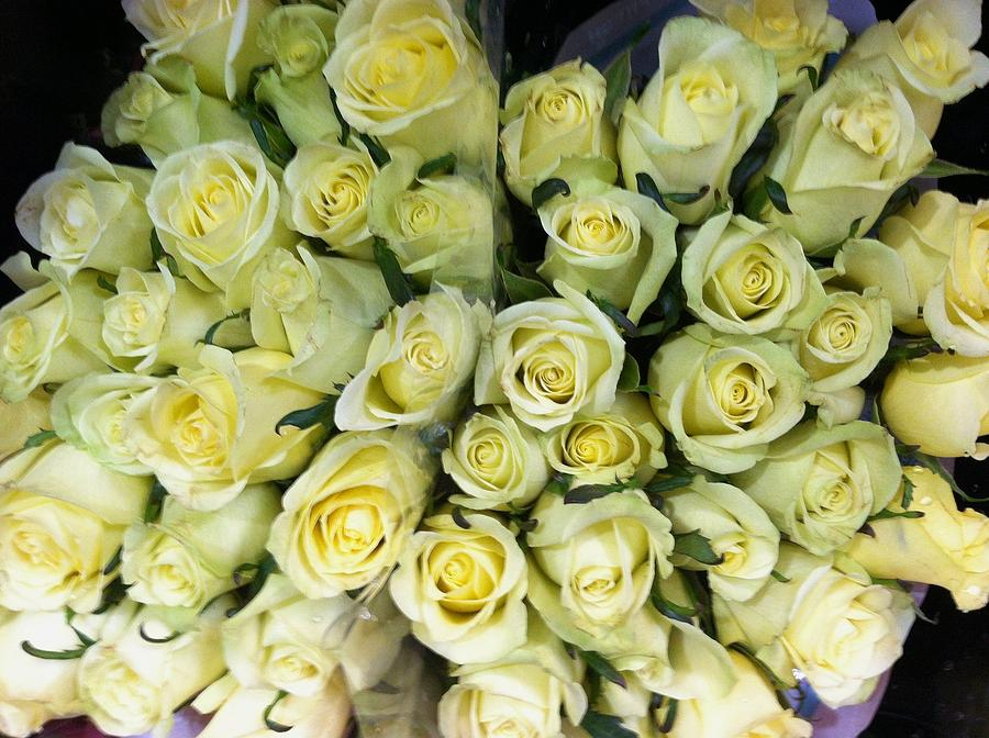 Yellow Photograph - Yellow Roses by Anna Villarreal Garbis