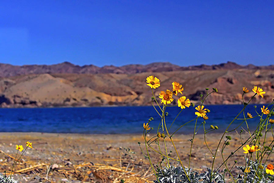 Floral Photograph - Yellow Sweet... by Bonnie Stillman