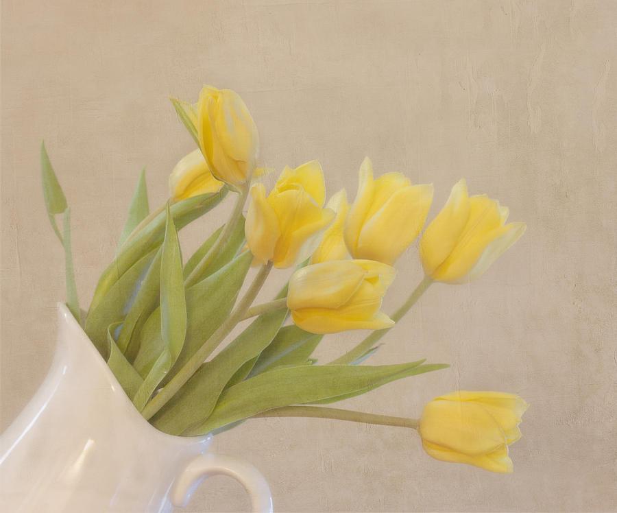 Horizontal Photograph - Yellow Tulips by Kim Hojnacki