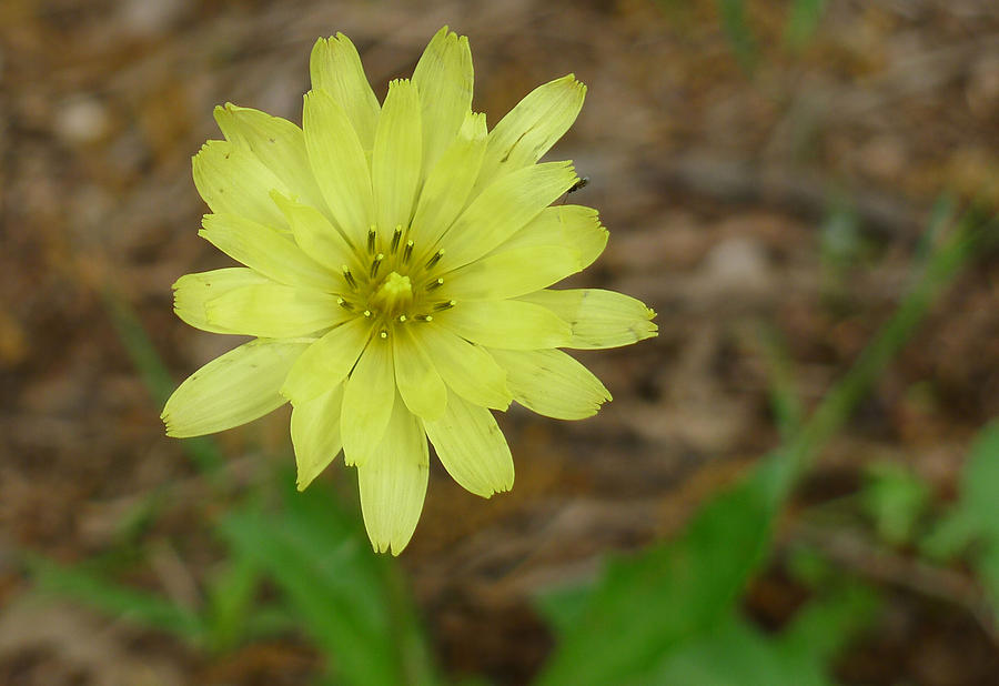 Flower Photograph - Yellow Wild Flower by Linda Pope