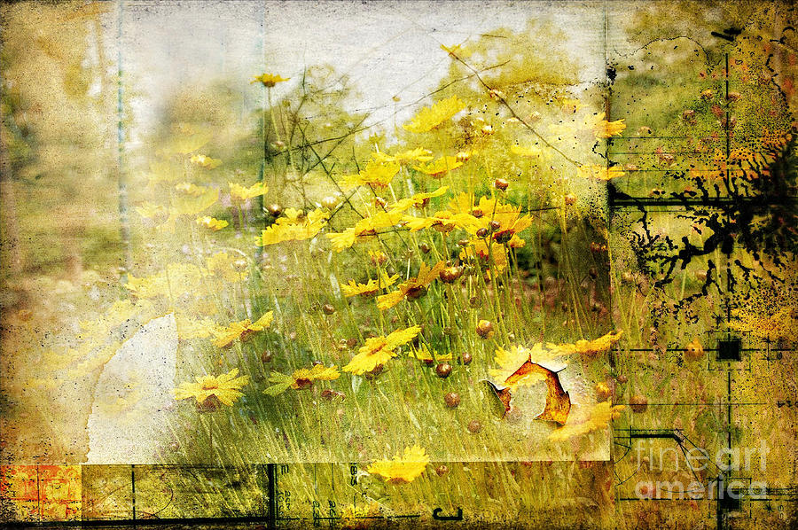 Flower Photograph - Yellow Wildflower Field Abstract by Elaine Manley