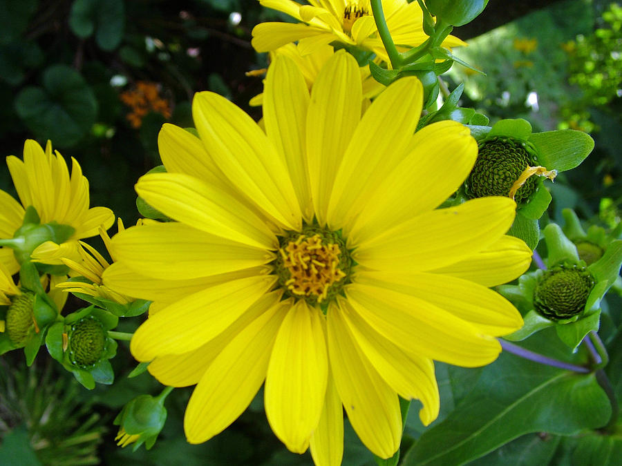 Yellowing Photograph by Fredrik Ryden