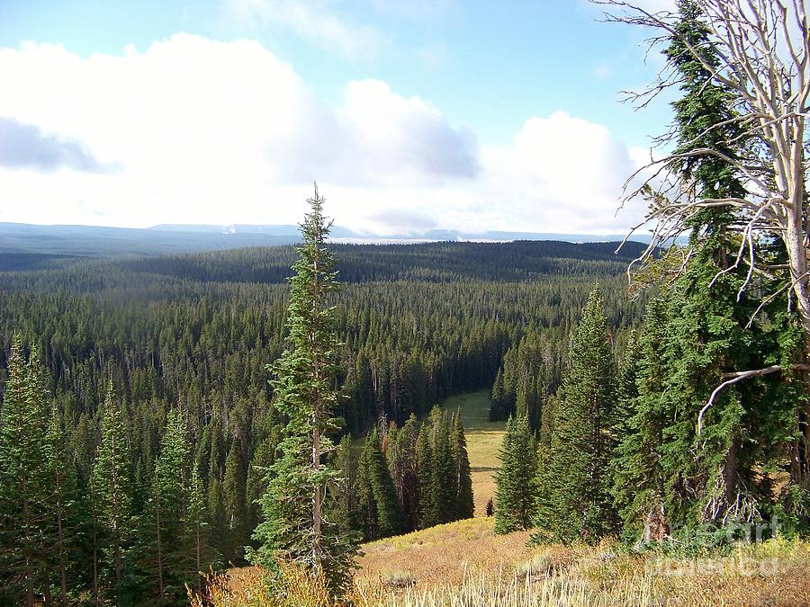 Yellowstone Park Elevation : Yellowstone high elevation forest photograph by charles