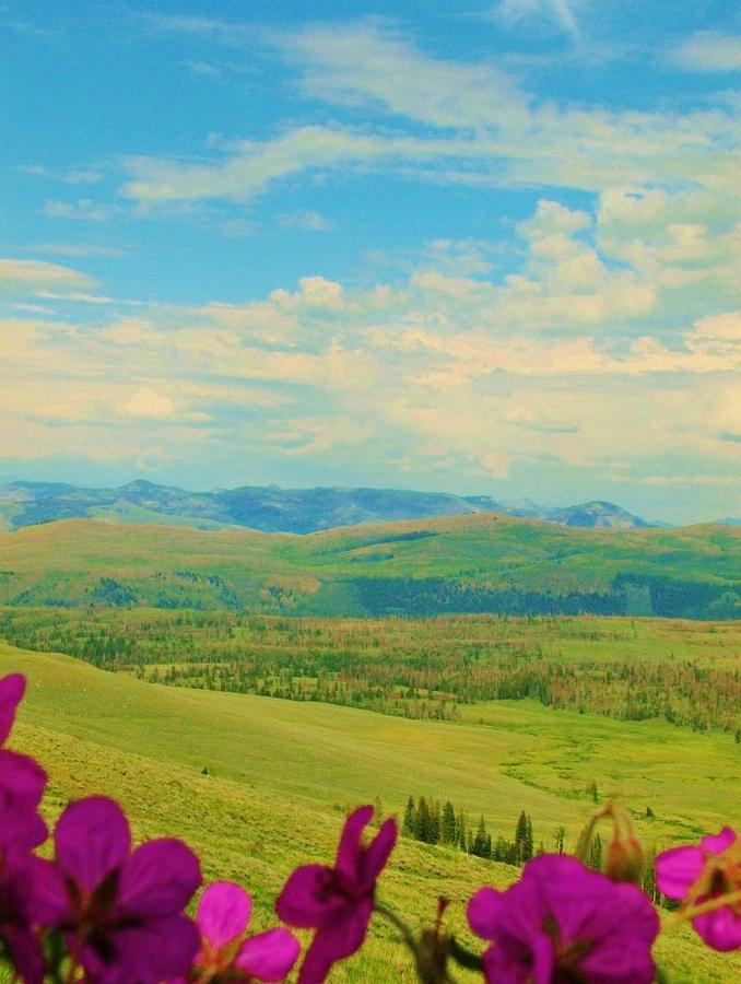 Yellowstone Park Photograph - Yellowstone Valley by Virginia Lei Jimenez