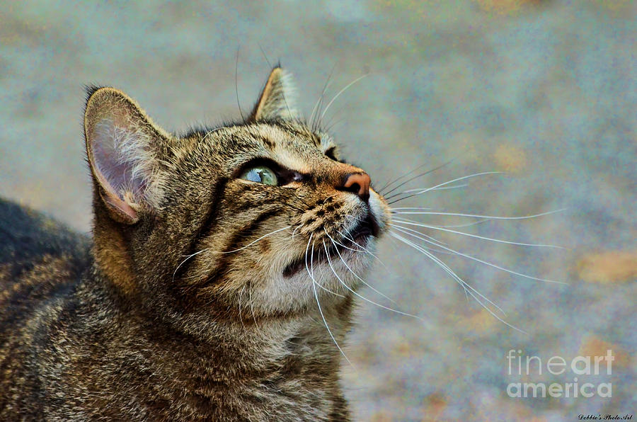 Nature Photograph - Yes I Am A Pretty Kitty by Debbie Portwood