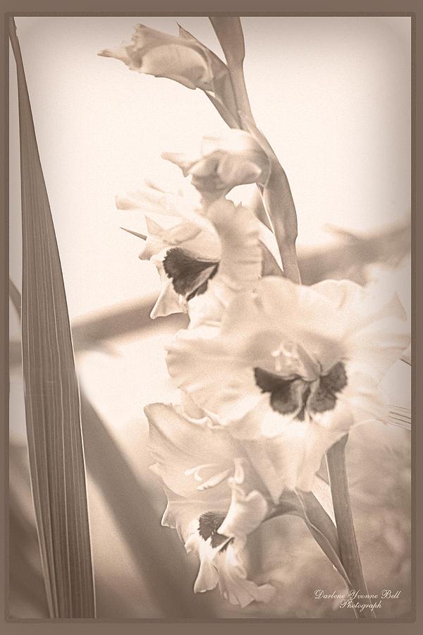Flowers Photograph - Yesterdays Gladiolus by Darlene Bell