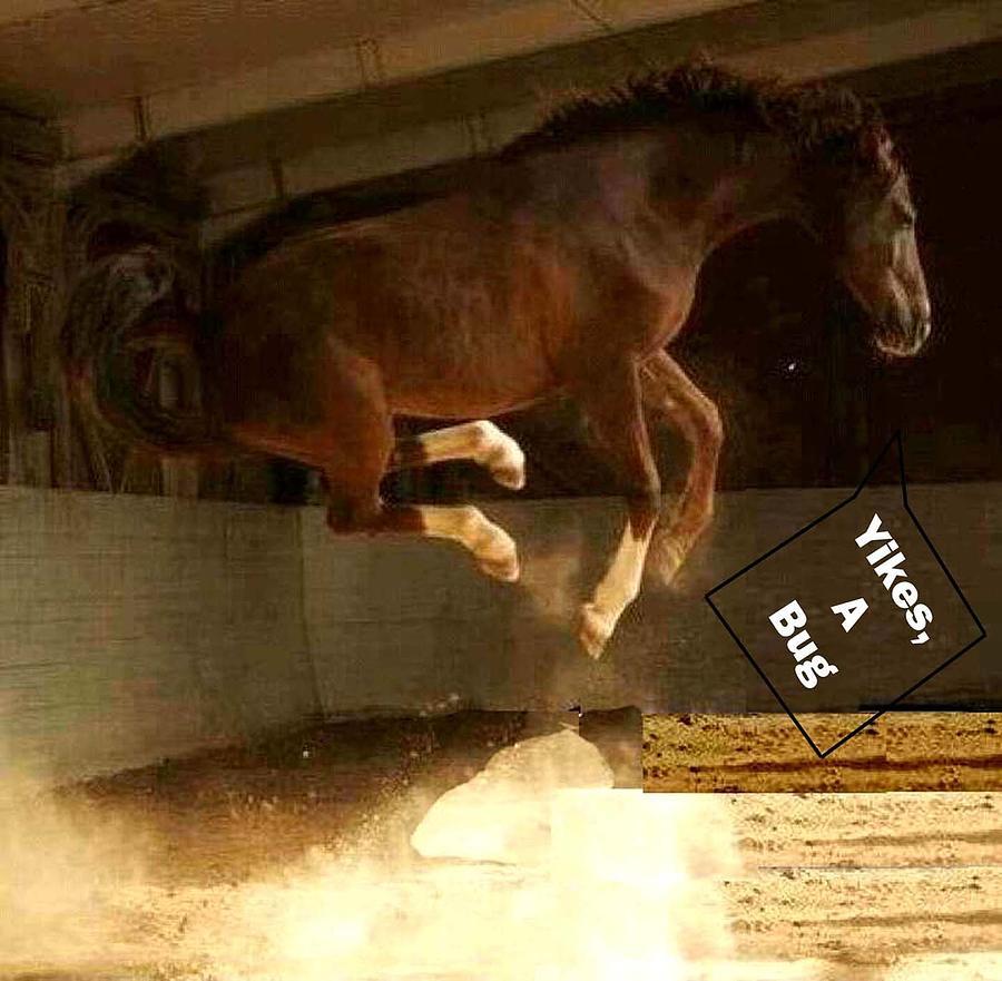Horse Photograph - Yikes A Bug by De Beall