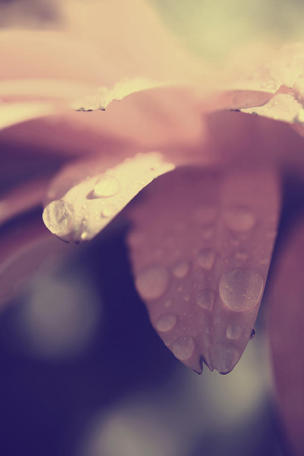 Flowers Photograph - You Left Me Crying by Laurie Search