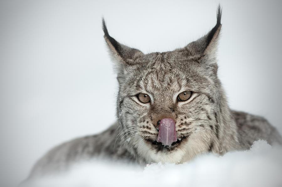 Animal Photograph - You Look Tasty Mr Cameraman by Andy Astbury