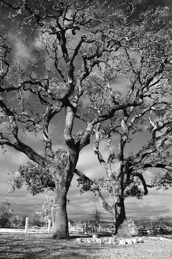 Oak Trees Photograph - You Never Let Me Down by Laurie Search
