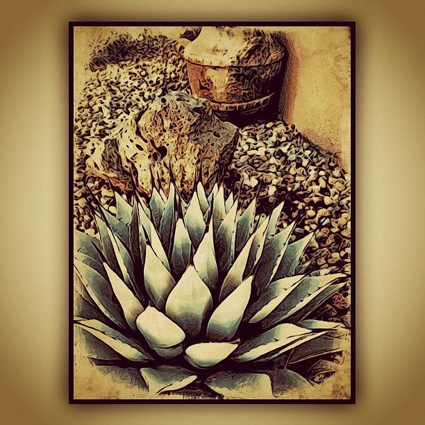 Plant Photograph - Young Agave by Paul Cutright